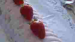 Semifreddo alle fragole (9)