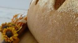Pane di farina Tumminia (15) ridotto